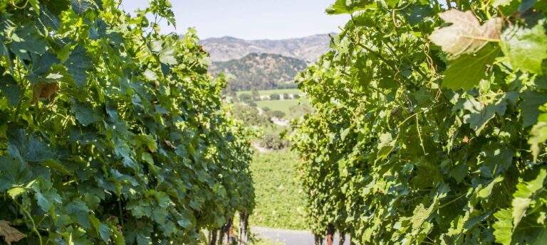 Important Considerations Before Building Your Winery